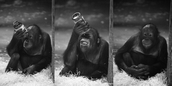 Linguagens de Programação Diferentes: Cada macaco no seu galho